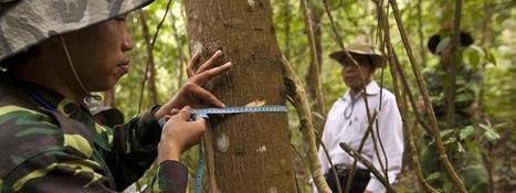 La FAO lance un logiciel informatique pour améliorer les systèmes nationaux de surveillance des forêts | Infogreen | InfoGreen.lu | Scoop.it