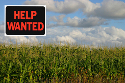 U.S. Forced to Import Corn as Shoppers Demand Organic Food | sustainablity | Scoop.it
