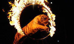 Wild Animals in Circuses Banned in Great Britain Under New Law | Direitos dos animais | Scoop.it