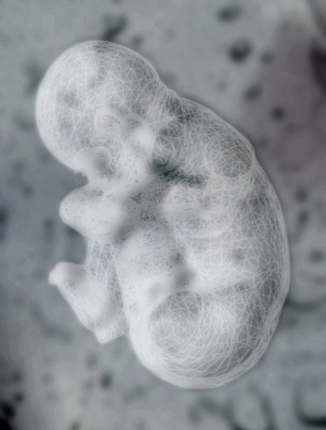 Human Microbiome May Be Seeded Before Birth | Innovation and Science breakthroughs | Scoop.it