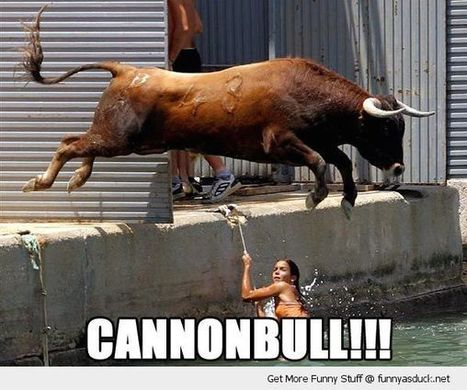 Pogo 18 | Cannon Bull | Pogo18.com | Scoop.it