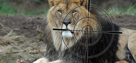 Stop Canned Hunting! #FOURPAWSgowild | Trophy Hunting: It's Impact on Wildlife and People | Scoop.it