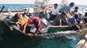 412 Whale Sharks rescued in Gujarat in 10years | All about water, the oceans, environmental issues | Scoop.it