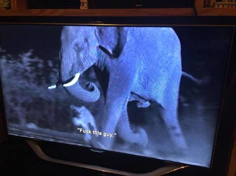 Netflix glitch causes BBC nature documentary to get Aziz Ansari subtitles   audiovisual translation   Scoop.it