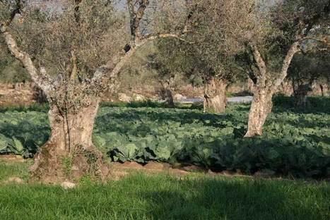 Un jardin (presque) sans eau | Shabba's Yard | Scoop.it