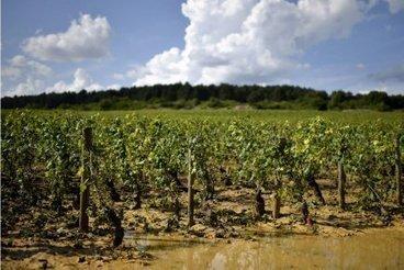 Millésime 2013: de petits rendements mais des vins à l'équilibre «plaisant» en Bourgogne | Actualités | Epicure : Vins, gastronomie et belles choses | Scoop.it