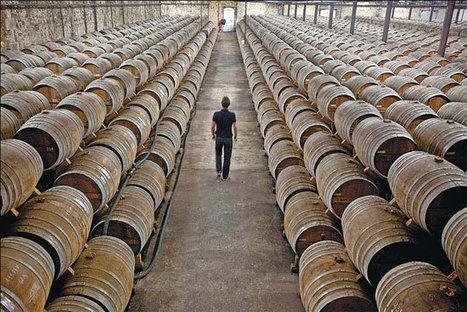 Putting some fizz into the wine market | Vitabella Wine Daily Gossip | Scoop.it