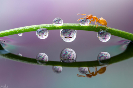 Bridge to Home by Miki Asai | I didn't know it was impossible.. and I did it :-) - No sabia que era imposible.. y lo hice :-) | Scoop.it
