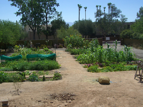 How A Community Created A Garden From Sadness : NPR | Local Food Systems | Scoop.it