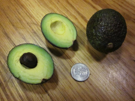 Incredibly Shrinking Avocados: Why This Year's Fruit Are So Tiny ...   CelebritizeYou   Scoop.it