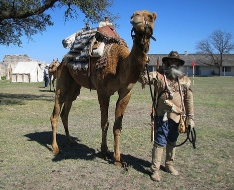 The United States Army Used Camels Until After the Civil War   TJMS United States History   Scoop.it
