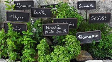 A Delicious Tour in France: Provence Markets | Gastronomy & Culinary Arts | Scoop.it