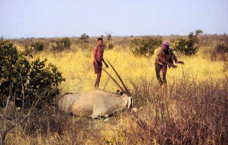 Les Nations-Unies condamnent le traitement infligé aux Bushmen du Botswana | L'Afrique australe (Afrique du Sud, Namibie, Botswana, Lesotho-Swaziland, Zimbabwe, Mozambique) | Scoop.it