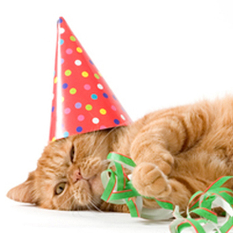 National Cat Vomit Day, and More Special Days for Cats | Animal Rescue & Shelter Life | Scoop.it