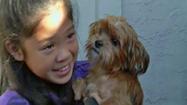 Girl Who Offered Piggy Bank Savings Gets Lost Dog Back | Pet Sitter Picks | Scoop.it