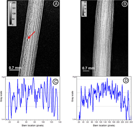 Factors influencing real time internal structural visualization and dynamic process monitoring in plants using synchrotron-based phase contrast X-ray imaging | PlantBioInnovation | Scoop.it