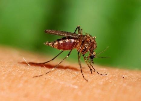 Instalaţi Plase de Insecte Pentru A Vă Proteja Interioarele De Atacul Gândacilor | Jaluzele Orizontale Exterioare | Scoop.it