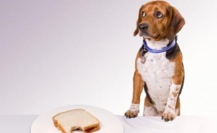 5 Pet Health Myths | pet health | Scoop.it