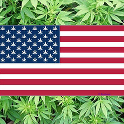 The One Thing Americans Get Right About Marijuana - PolicyMic | Cannabis Law Reform | Scoop.it