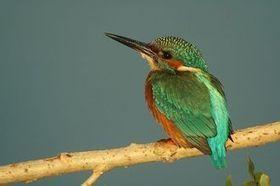 Proyecto TRINO (Turismo Rural de Interior y Ornitología) | Casa NIDO - HOUSE NEST | Scoop.it