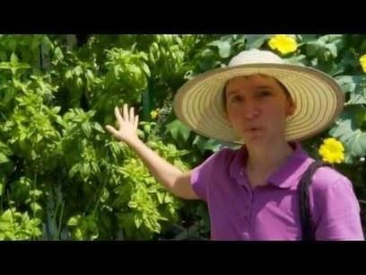 Aquaponics Basil Grow Towers - YouTube | Aquaponics | Scoop.it