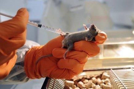 Un traitement expérimental réduit deux troubles de l'autisme chez des souris | Autisme actu | Scoop.it