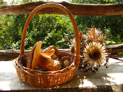 Castagne e funghi: a caccia dei sapori d'autunno nei borghi della Toscana | Bagno Pardini beach club & restaurant | Scoop.it