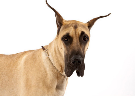 The 15 Quietest Dog Breeds | P-FORCE | Scoop.it