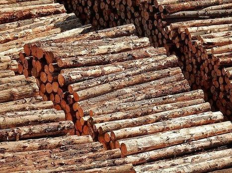 5 Technologies Help Thwart Illegal Logging by Tracing Wood's Origin | The Glory of the Garden | Scoop.it