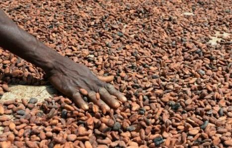 Côte d'Ivoire: accord entre un chocolatier français et les producteurs pour une cacaoculture durable   RSEco-systémique   Scoop.it