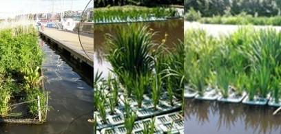 Fitodepurazione delle acque con le zattere flottanti   Architecture & Gardens   Scoop.it