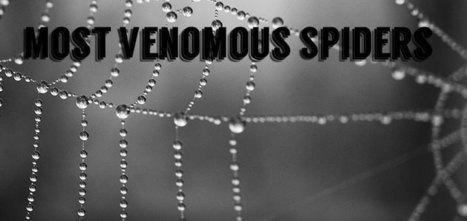 Top 10 Most Venomous Spiders on Earth | Top Ten Lists | Scoop.it