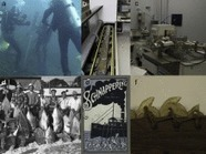 Filling historical data gaps to foster solutions in marine conservation | Legacy Information Resources | Scoop.it