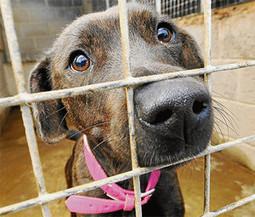 Per combattere l'abbandono, cosa fare per aiutare cani e gatti lasciati in strada   Bau Bau News - Amici a 4 Zampe   Scoop.it