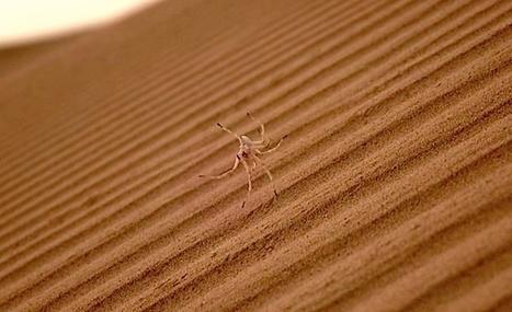 Cartwheeling Spider Robots on Sand Dunes - Automaton IEEE Spectrum | Robohub | Scoop.it