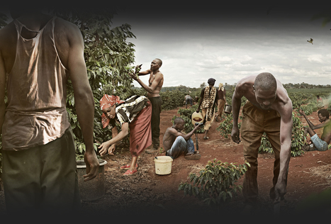 Zbuduj FreeDOM dla byłych ofiar niewolnictwa | Nonprofit website design | Scoop.it