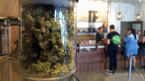 Kennedy group puts $2 million into fight against pot-legalization measures   Business News & Finance   Scoop.it