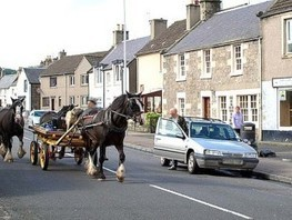 Justice for Dog Dragged Behind Horse Cart | Nature Animals humankind | Scoop.it