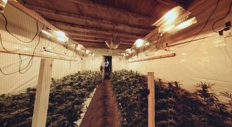 La mayor fábrica subterranea de marihuana descubierta en Inglaterra (VÍDEO) | thc barcelona | Scoop.it