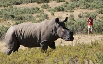 Mpumalanga rhino sanctuary secures R600,000 donation | What's Happening to Africa's Rhino? | Scoop.it