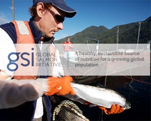 Global Salmon Initiative issues tender for new sources of Omega-3 feed oils - Aquaculture Directory | Aquaculture Directory | Scoop.it