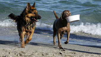 Rover can come on over to Boca's beach Dec. 13 | Where can I take my dog to the beach? | Scoop.it