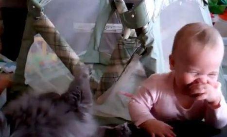 Des rires, des bébés et des chats - Doctissimo (Blog) | Titis Doudous | Scoop.it