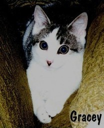 The Power of One Tiny Kitten | Writing and Other Crazy Stuff | Scoop.it