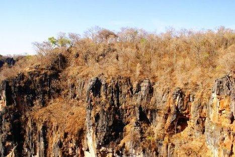 Una base de datos para conservar los bosques secos tropicales en Latinoamérica   Educacion, ecologia y TIC   Scoop.it
