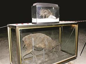 Mummified animals preserved in Turkish cave | Archaeology News | Scoop.it