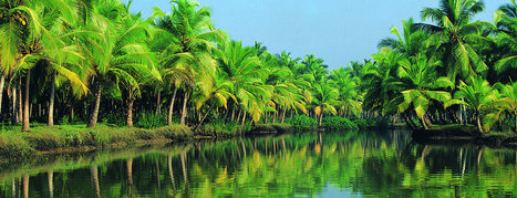 Kerala Tour and Travels | Casthew Martin | Scoop.it