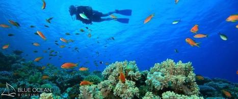 Scuba Diving in the Virgin Islands | Blue Ocean Booking | Lets Get Wet - Scuba and Ocean News | Scoop.it