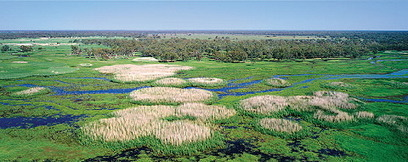 Macquarie Marshes- biodiversity or needs of the farmers- your call? | Geography in the classroom | Scoop.it