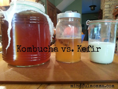 Fermented Beverage Smackdown: Kombucha vs. Kefir | Nourish | Scoop.it